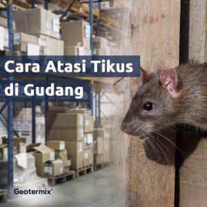 cara membasmi tikus di gudang
