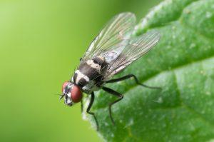 fly control bali