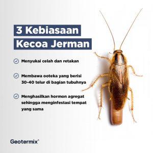 kecoa jerman